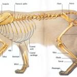 Model Mekanika Gerakan Kucing